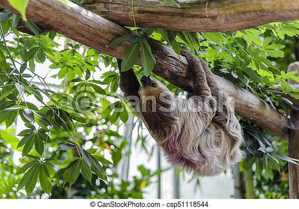 shaggy sloth hanging upside down on a wooden crossbar