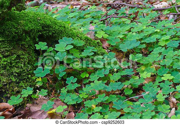 Shamrock - The Symbol of Ireland - csp9252603