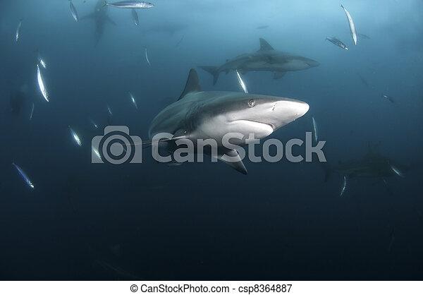 Shark escape - csp8364887