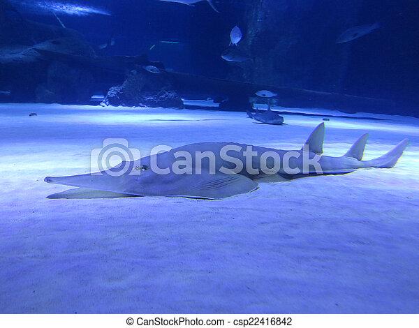shark of the sea floor in the deep blue water - csp22416842