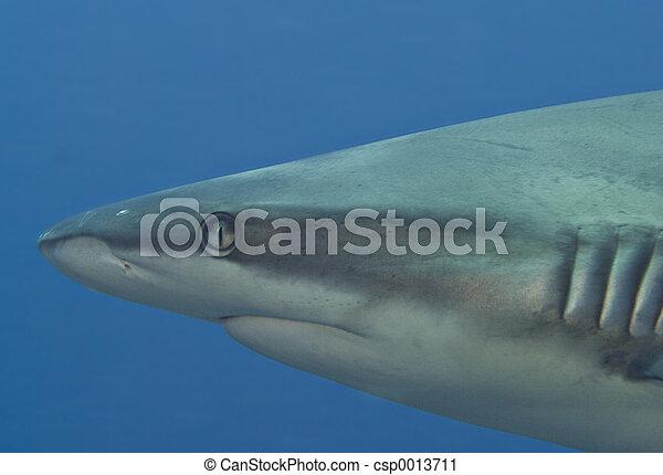 Shark portrait - csp0013711