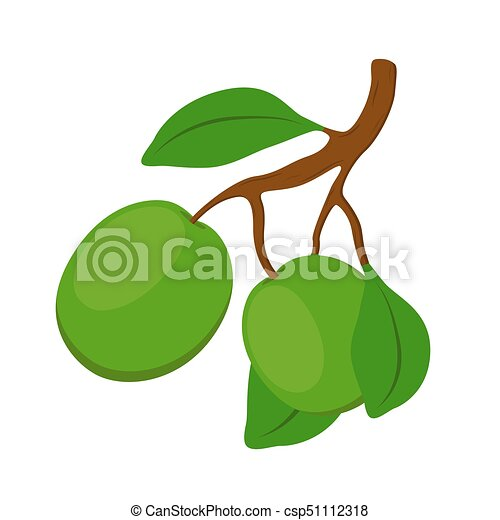 Shea cosmetics organic plant, nut. Cartoon flat style. Vector illustration - csp51112318