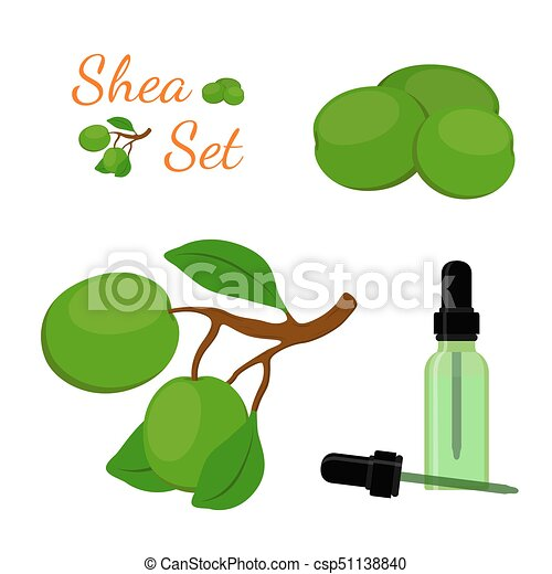 Shea nut, oil in bottle. Cartoon flat style. Vector illustration - csp51138840