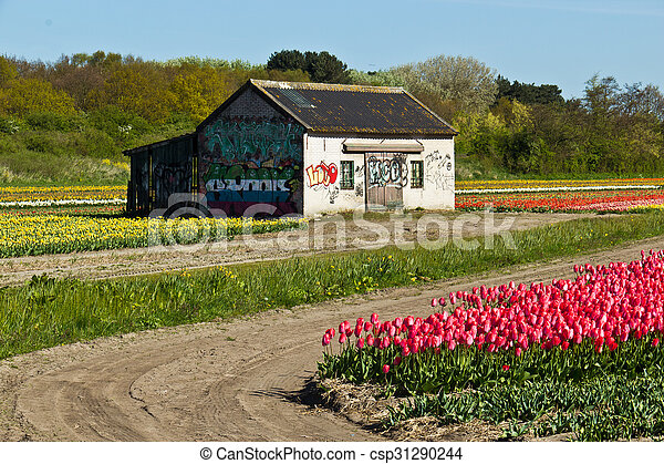 Shed on a tulip farm in rural Holland - csp31290244