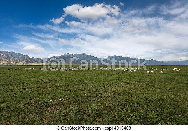 sheep, 青い空, 群れ, 下に, 牧草地 - csp14913468