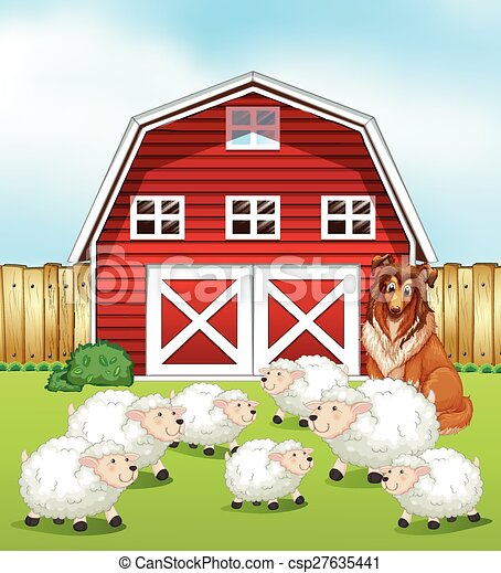 Sheep And Barn Standing On The Field In Front Of A
