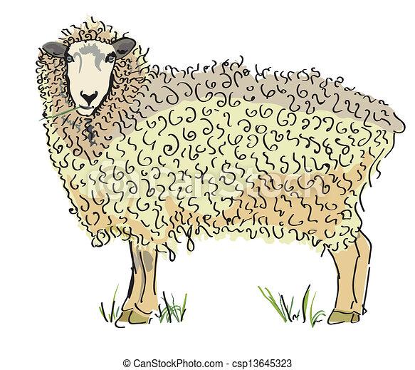 Vector de ovejas australiano - csp13645323