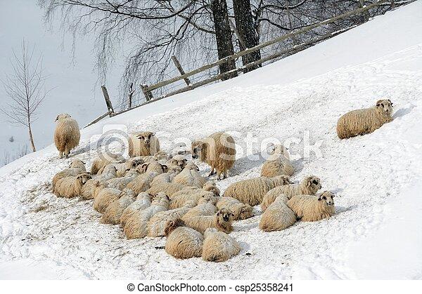 Sheep Flock in Mountain - csp25358241