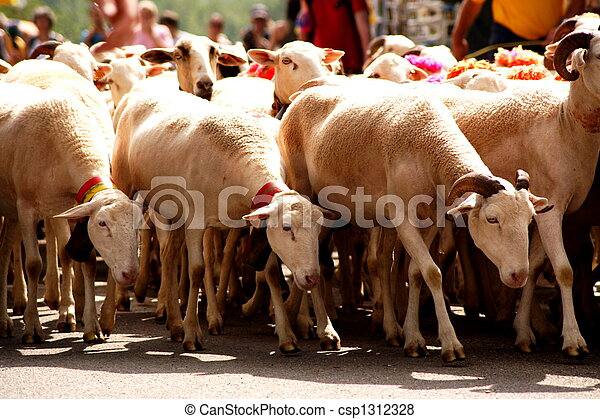 sheep flock - csp1312328