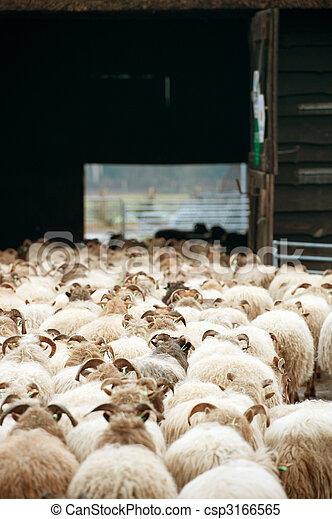Sheep flock - csp3166565