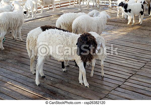 sheep in the farm - csp26382120