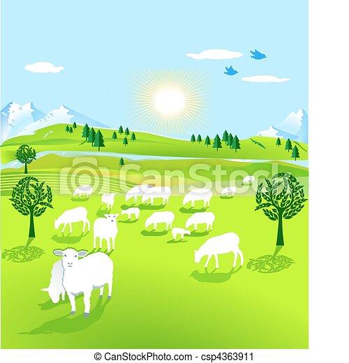 Reloj de ovejas - csp4363911