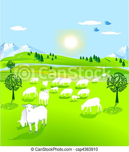 Reloj de ovejas - csp4363910