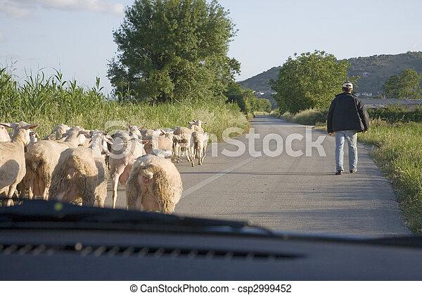 sheep - csp2999452