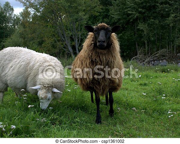 Sheep with lamb - csp1361002