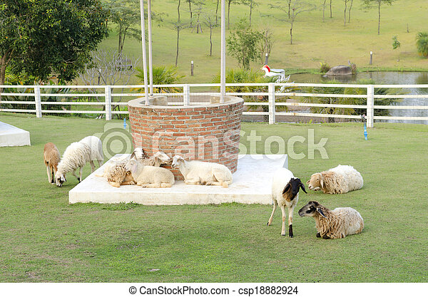 Sheeps in a meadow in the mountains - csp18882924