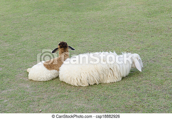 Sheeps in a meadow in the mountains - csp18882926