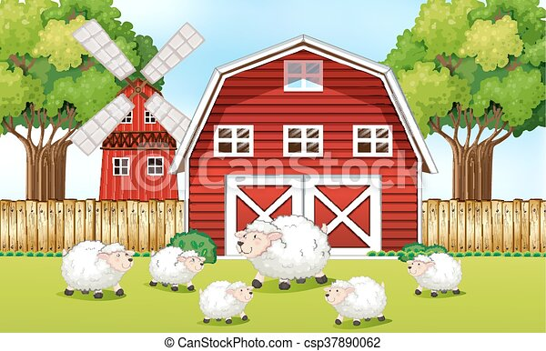 Sheeps In The Farm With Red Barns