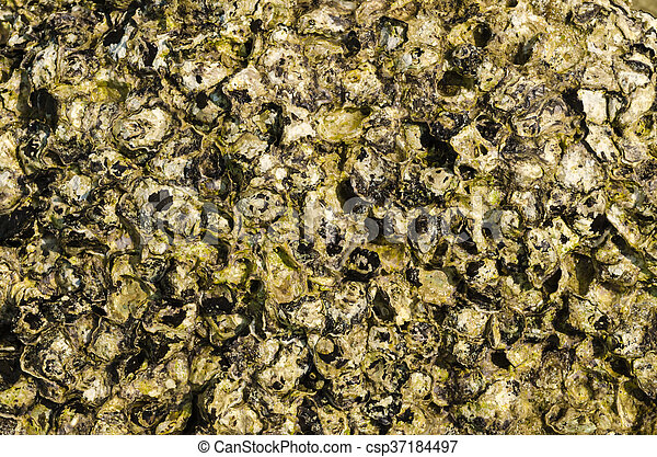 Shell and stone for background texture. - csp37184497