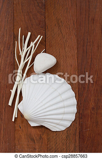 shell on brown wooden background - csp28857663