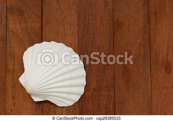 shell on brown wooden background - csp28385533
