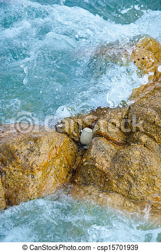 shell on stone in sea - csp15701939