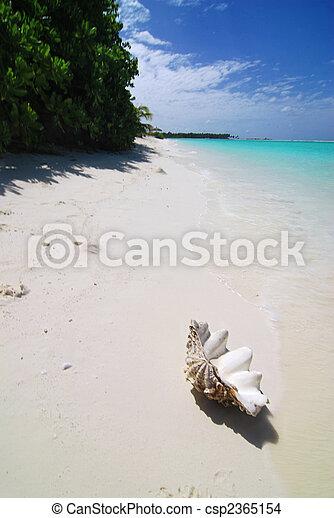 Shell on the beach - csp2365154