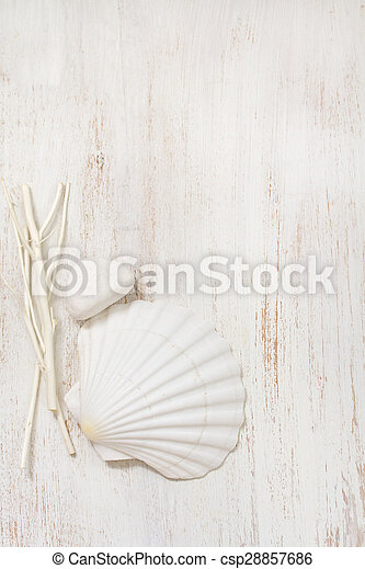 shell on white wooden background - csp28857686