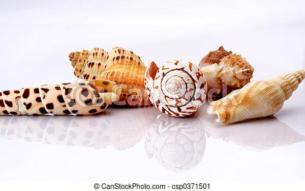 Shell - csp0371501