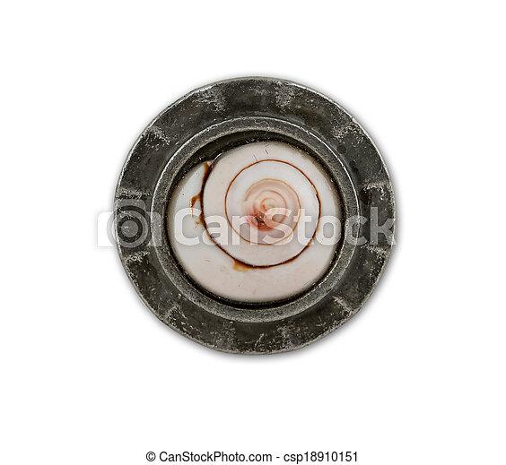 Shell ring - csp18910151