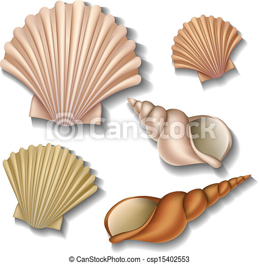 Shell set - csp15402553