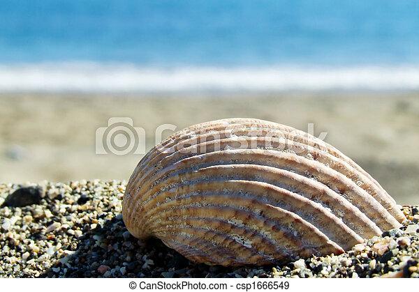 shell - csp1666549