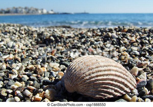 shell - csp1666550
