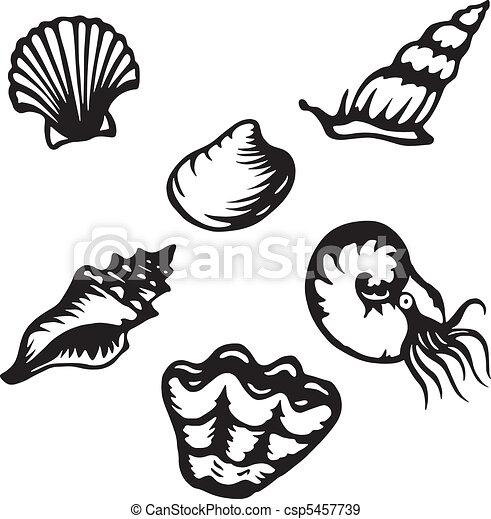 Shelled creatures - csp5457739