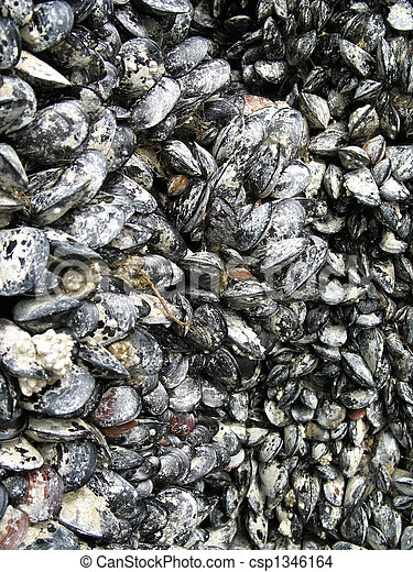 shells attached to a wall together - csp1346164