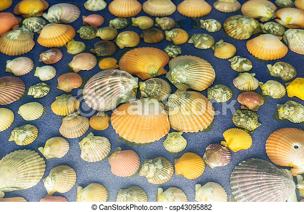 Shells on blue background - csp43095882
