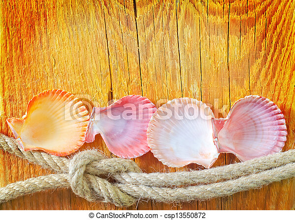 shells on wooden background - csp13550872