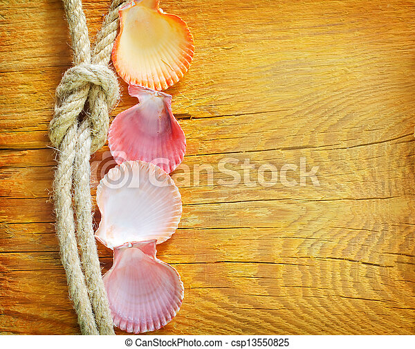 shells on wooden background - csp13550825