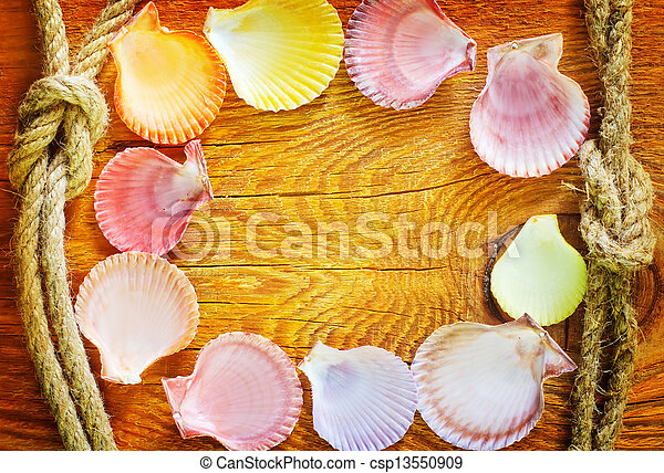 shells on wooden background - csp13550909