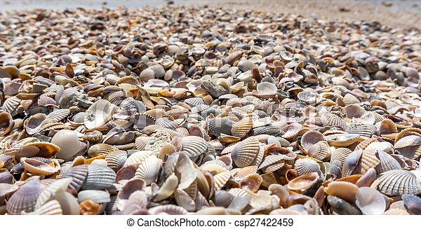 Shells - csp27422459