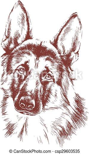 shepherd vector dog sketch - csp29603535