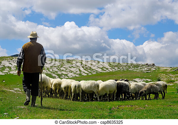 Shepherd with his sheep on pasture - csp8635325