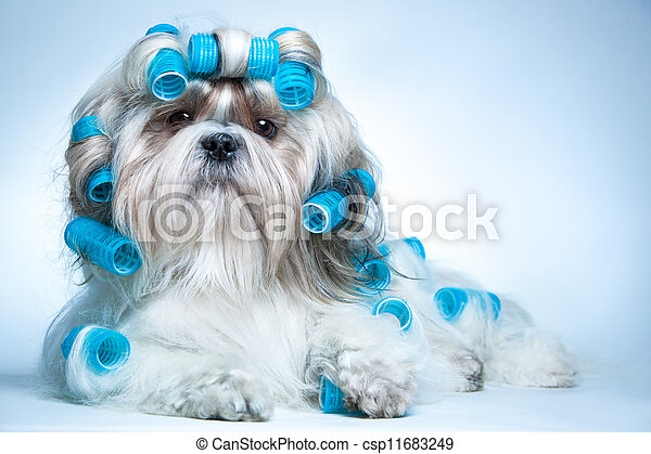 Shih tzu dog - csp11683249