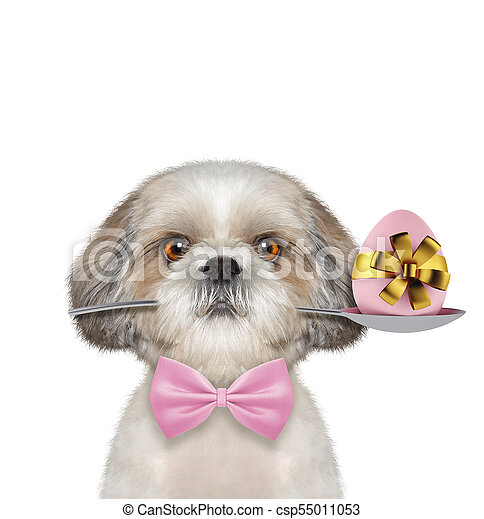 Shitzu dog with spoon and easter egg. Isolated on white - csp55011053
