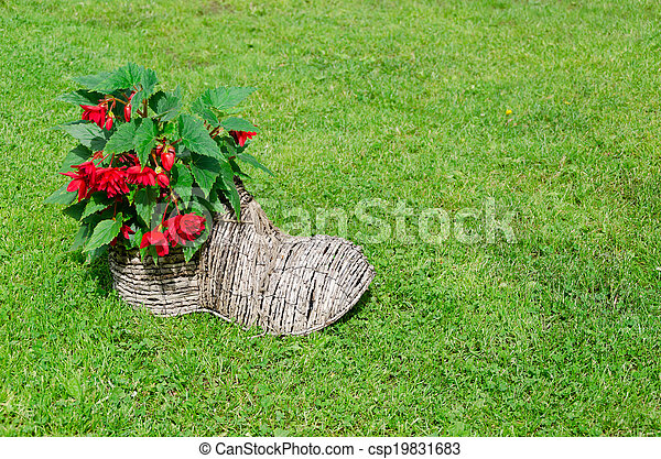 shoe flower pot with begonias. rural decoration - csp19831683