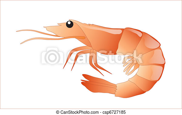 shrimp illustrations and stock art 11 225 shrimp illustration and rh canstockphoto com shrimp clip art border shrimp clip art images