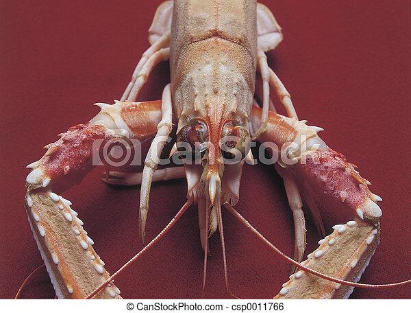 Shrimp - csp0011766