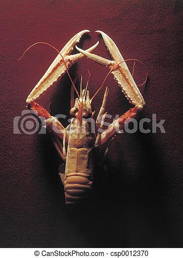 Shrimp2 - csp0012370