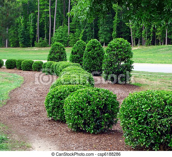 Shrubs Stock Photo Images 77 257 Shrubs Royalty Free Pictures And