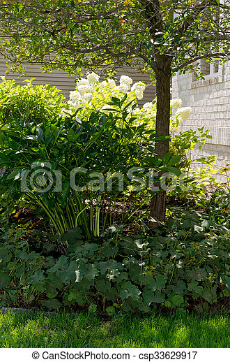 Shrubs and Tree in Front Yard - csp33629917